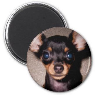 mini pinscher. 2 inch round magnet