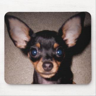 mini pinscher mouse mats