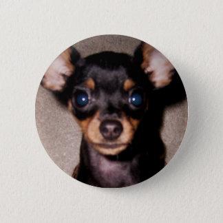 mini pinscher. pinback button