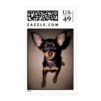 mini pinscher. postage stamps