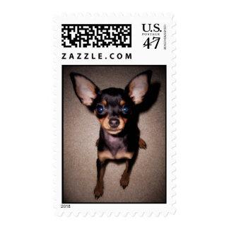 mini pinscher. stamp