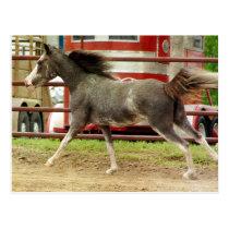 Mini Pinto Horse Gallops Postcard
