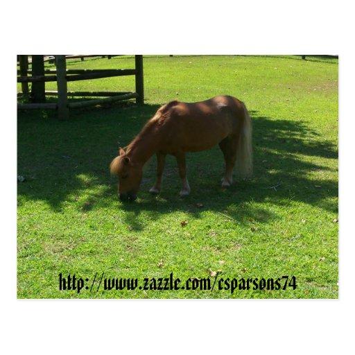 Mini postal del caballo