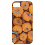 Mini Pumpkins iPhone 5/5s Case