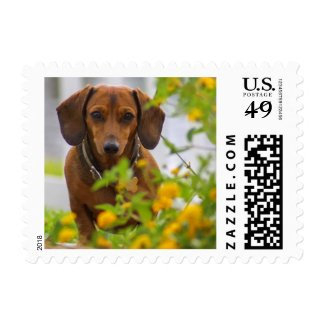 Mini Red Dachshund Stamps