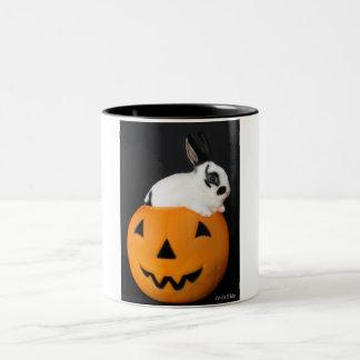 Mini Rex in a pumpkin mug
