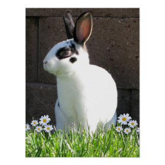 Mini rex with daisies poster
