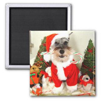 Mini Schnauzer Christmas Magnet