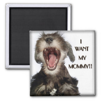 Mini Schnauzer Puppy Magnet