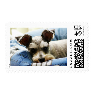 Mini Schnauzer Sello Postal