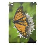 Mini tableta de la mariposa