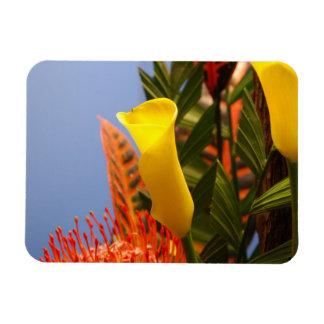 mini yellow calla lilies rectangular photo magnet