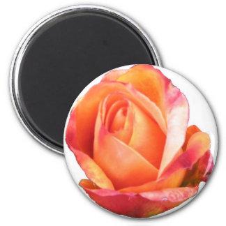 Miniatura ambarina de Sunblaze subió Imán Redondo 5 Cm