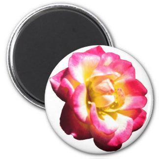 Miniatura color de rosa americana 038 de la socied imán redondo 5 cm