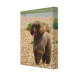 Miniatura del perro de caniche en la impresión env impresiones de lienzo