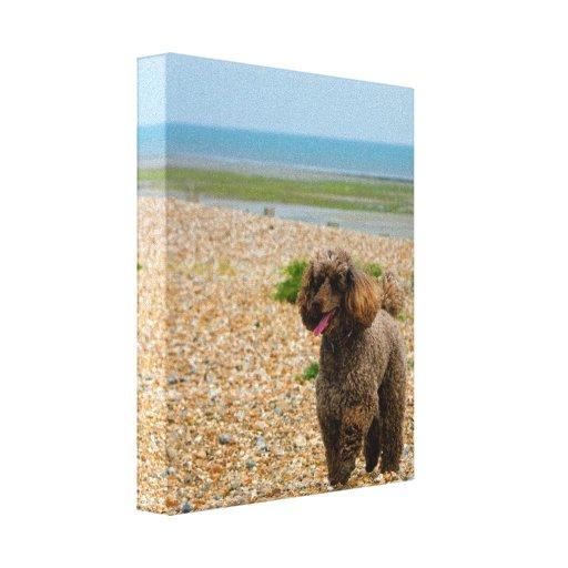 Miniatura del perro de caniche en la impresión env impresiones en lienzo estiradas