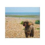 Miniatura del perro de caniche en la impresión env lienzo envuelto para galerías