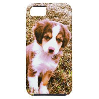Miniature Australian Shepherd! Mini Aussie Puppy! iPhone SE/5/5s Case