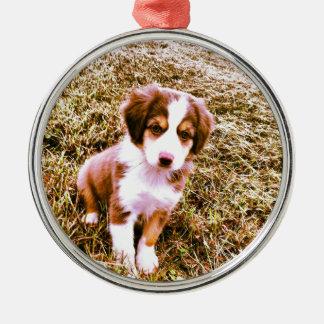 Miniature Australian Shepherd! Mini Aussie Puppy! Metal Ornament