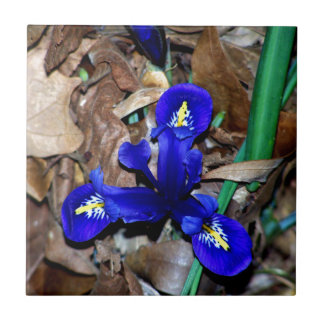 Miniature Blue Dutch Iris Ceramic Tile