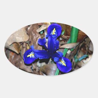 Miniature Blue Dutch Iris Oval Sticker