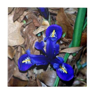 Miniature Blue Dutch Iris Small Square Tile