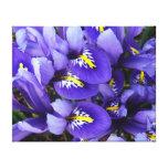 Miniature Blue Irises Spring Floral Canvas Print
