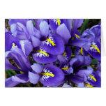 Miniature Blue Irises Spring Floral Card