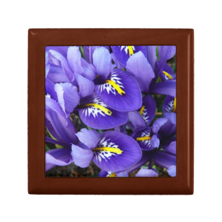 Miniature Blue Irises Spring Floral Gift Box