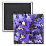 Miniature Blue Irises Spring Floral Magnet