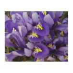 Miniature Blue Irises Spring Floral Wood Print