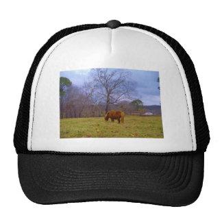 Miniature brown horse blustery sky trucker hat