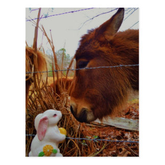 Miniature Brown horse Easter Bunny Postcard