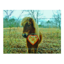 Miniature Brown horse Valentine Heart Postcard