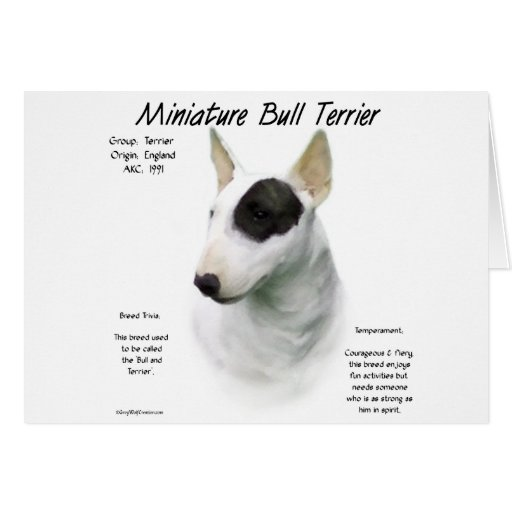 Miniature Bull Terrier History Design Greeting Card