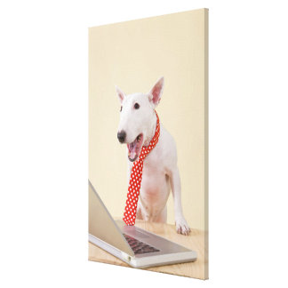 Miniature Bull Terrier looking at laptop, Canvas Print