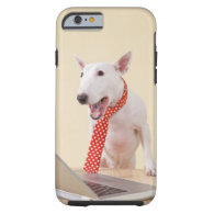Miniature Bull Terrier looking at laptop, iPhone 6 Case
