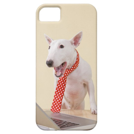 Miniature Bull Terrier looking at laptop, iPhone SE/5/5s Case