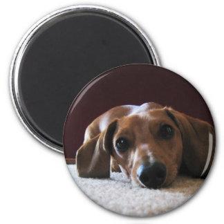 Miniature Dachshund 2 Inch Round Magnet
