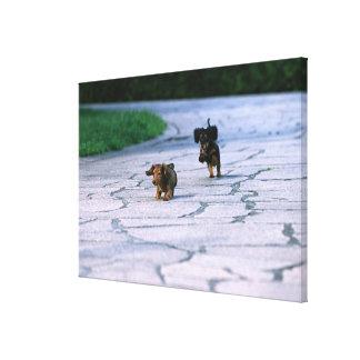 Miniature Dachshund 3 Canvas Print