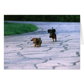Miniature Dachshund 3 Card
