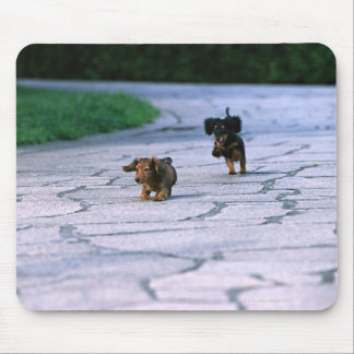 Miniature Dachshund 3 Mouse Pad