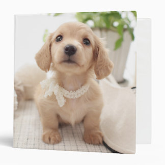 Miniature Dachshund 3 Ring Binder