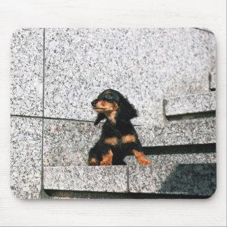 Miniature Dachshund 4 Mouse Pad