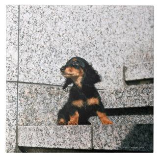 Miniature Dachshund 4 Ceramic Tile