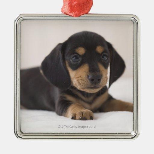 Miniature Dachshund Christmas Ornament