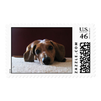 Miniature Dachshund Postage Stamps