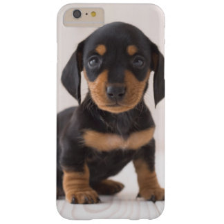 Miniature Dachshund Sitting Barely There iPhone 6 Plus Case