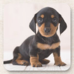 "Miniature Dachshund Sitting Coaster<br><div class=""desc"">Miniature dachshund sitting</div>"