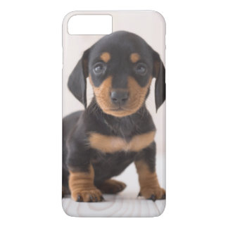 Miniature Dachshund Sitting iPhone 8 Plus/7 Plus Case